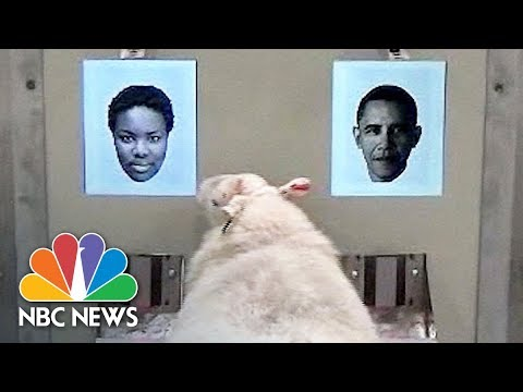 University Of Cambridge Research: Sheep Can Be Trained To Recognize Faces | NBC News