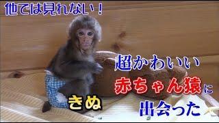お得な温泉宿シリーズ。今回は、日光さる軍団に保護された【赤ちゃん猿...
