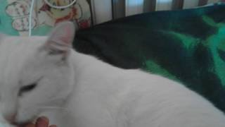 Обзор на мою кошку с разными глазами