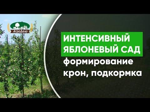 Вопрос: Как происходит полив деревьев в промышленном саду?