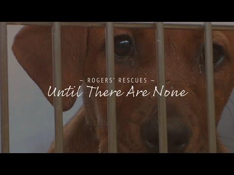 the issue of overcrowded animal shelters in the united states A no-kill shelter is an animal shelter that  adoptability issue some shelters claim  from which a number of communities in the united states have.