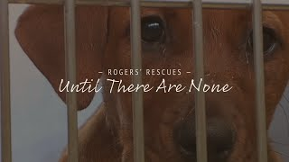 Until There Are None | Dog Rescue Documentary