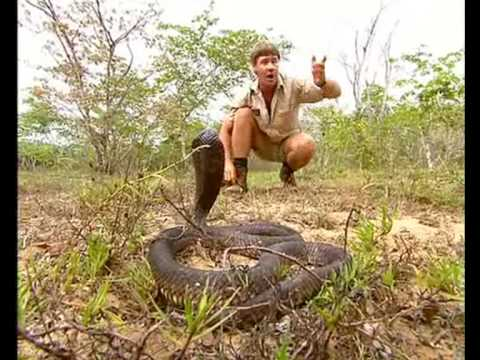 Africa's Deadliest Snakes (Part 1)
