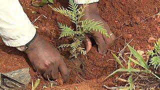 BURUNDI: Ensemble nous pouvons...