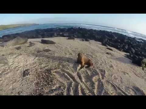 Galapagos Island GoPro Exploration Number 1