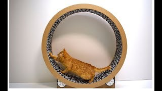 Cats Running Wheel from cardboard Cat Exercise Wheel Game trainer for cats