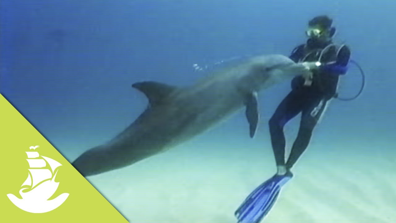 Wild dolphins and humans have a great friendship - YouTube  Wild dolphins a...