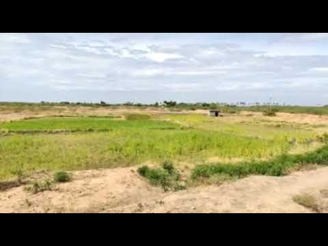 10 Acre Agriculture Land with EB & Borewell at Madurai Surrounding