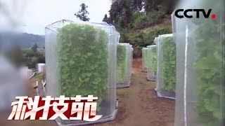 【Agricultural Technology】20171218 | CCTV Agriculture