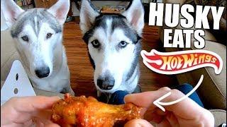 Siberian Husky LOVES Chicken Wings!
