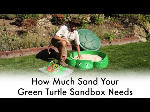 How Much Sand Your Green Turtle Sandbox Needs | Jurassic Sands
