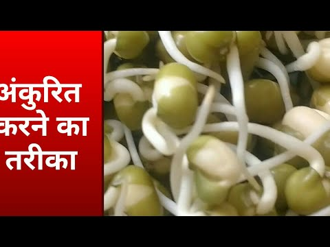 How to | Sprouts | Make Sprouts | Mung Beans | Moong Beans | Seeds |Lentils|at home|Without Sprouter