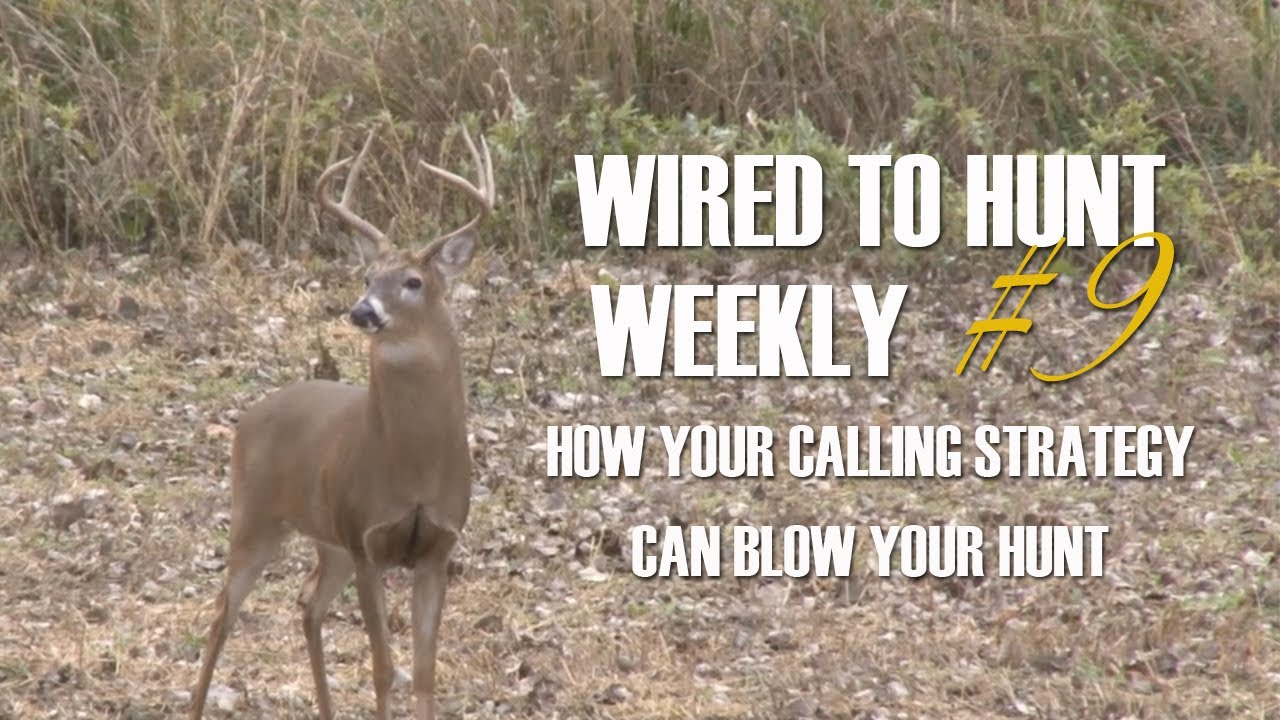 Wired To Hunt Weekly #9: How Your Calling Strategy Can Blow Your ...