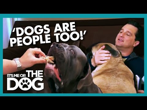 Dogs Treated Like Humans Are Ruling the Household | It's Me or the Dog
