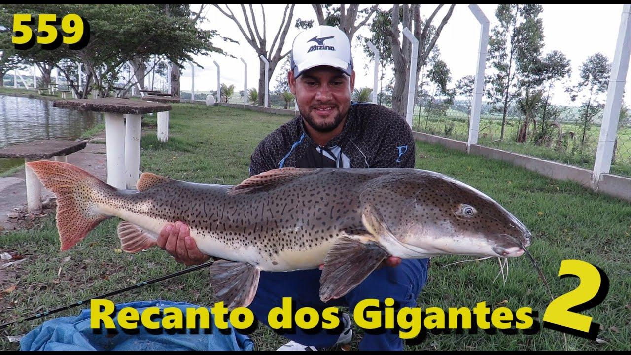Recanto dos Gigantes II - Muita chuva e vento com grandes peixes - Fishingtur na TV 559