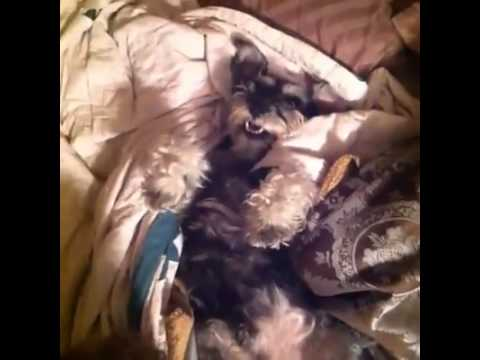 Dog Answers to All Questions by Raising his Arm - Best Vines