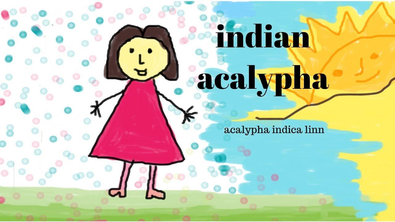 Indian Acalypha Acalypha Indica Linn Youtube