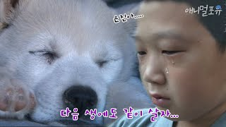 동자승의 눈물, 절에서 강아지 키우기 ⑦ KBS 081…