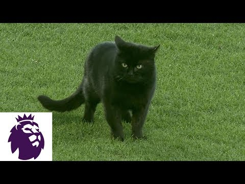 iHeartCountry Trending - Curious Cat Invades Soccer Game