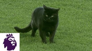 Black cat wanders around pitch at Goodison Park | Premier League | NBC Sports