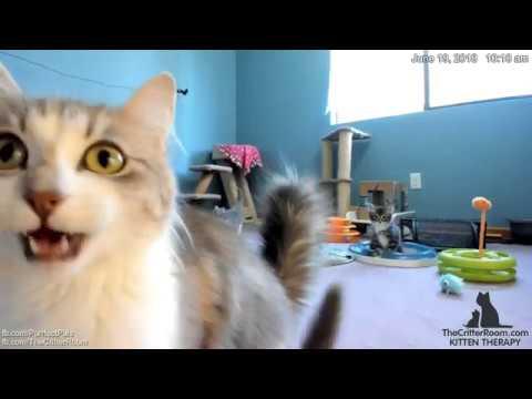 Guardian Kittens - Morning Cam Fix 2018-06-19