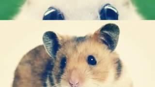 10 Самых милых фото хомяков ♥♥♥