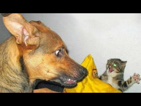 100% FUNNY ANIMALS VIDEO 😂