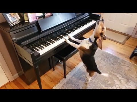 Cats & dogs singing with their owners - Cutest Pet Animal Videos