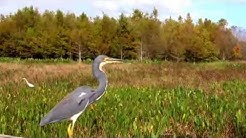 Great Florida Birding Trail Demo..