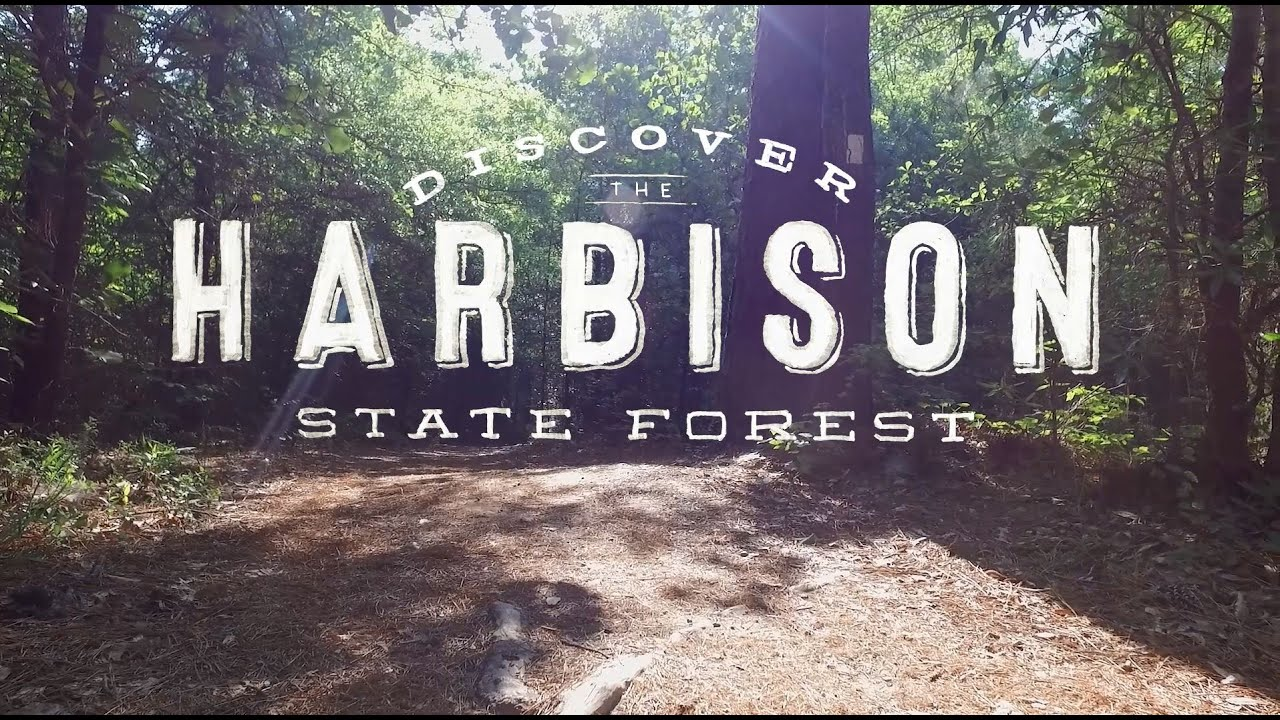 Discover Harbison State Forest