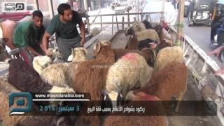 بالفيديو| الضاني بـ 42 جنيها.. ركود بشوادر الأغنام بالجيزة لغلاء الأسعار