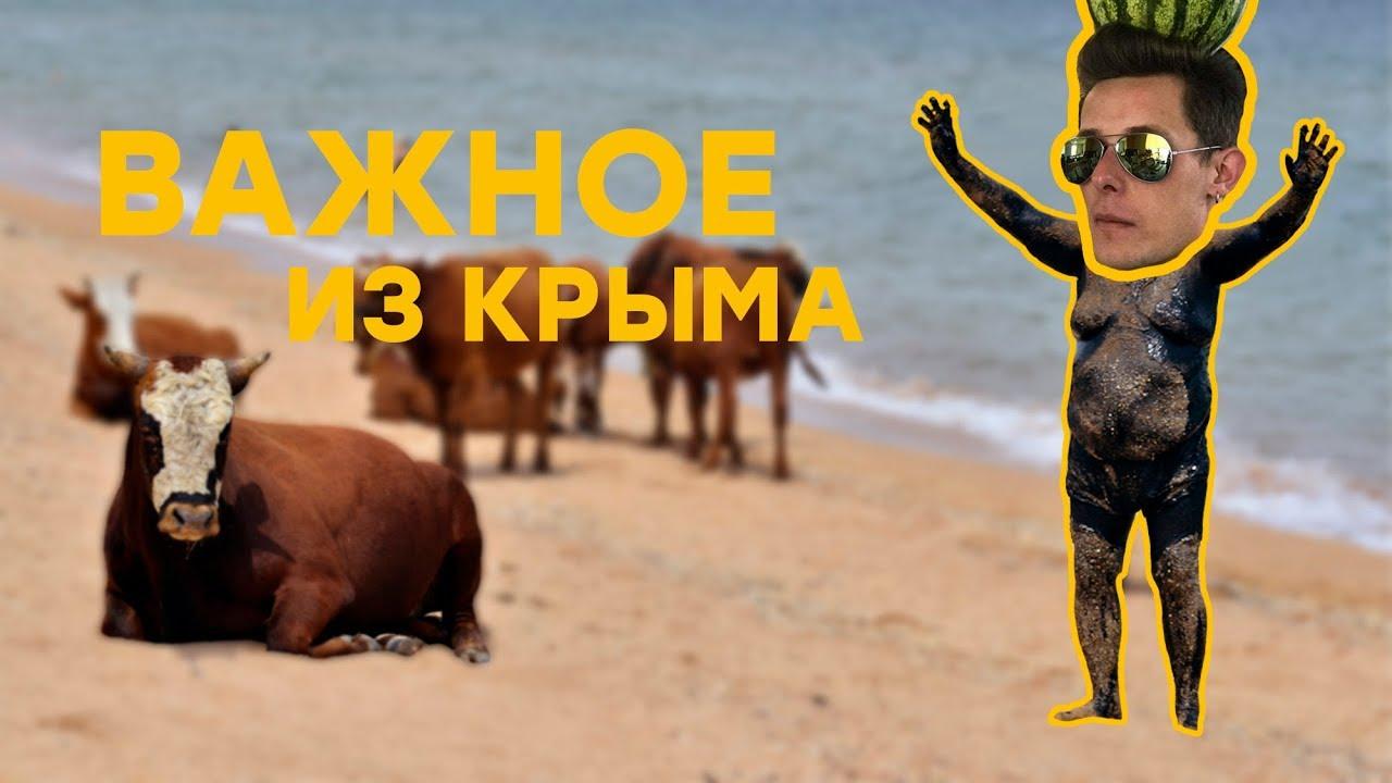 «Золотая» ферма и «новый Крымский мост» | Важное из Крыма