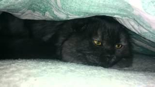 Кот спрятался и мурлыкает