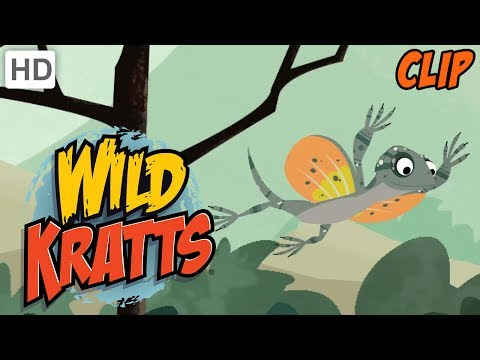 Wild Kratts - Exploring Animal Habitats