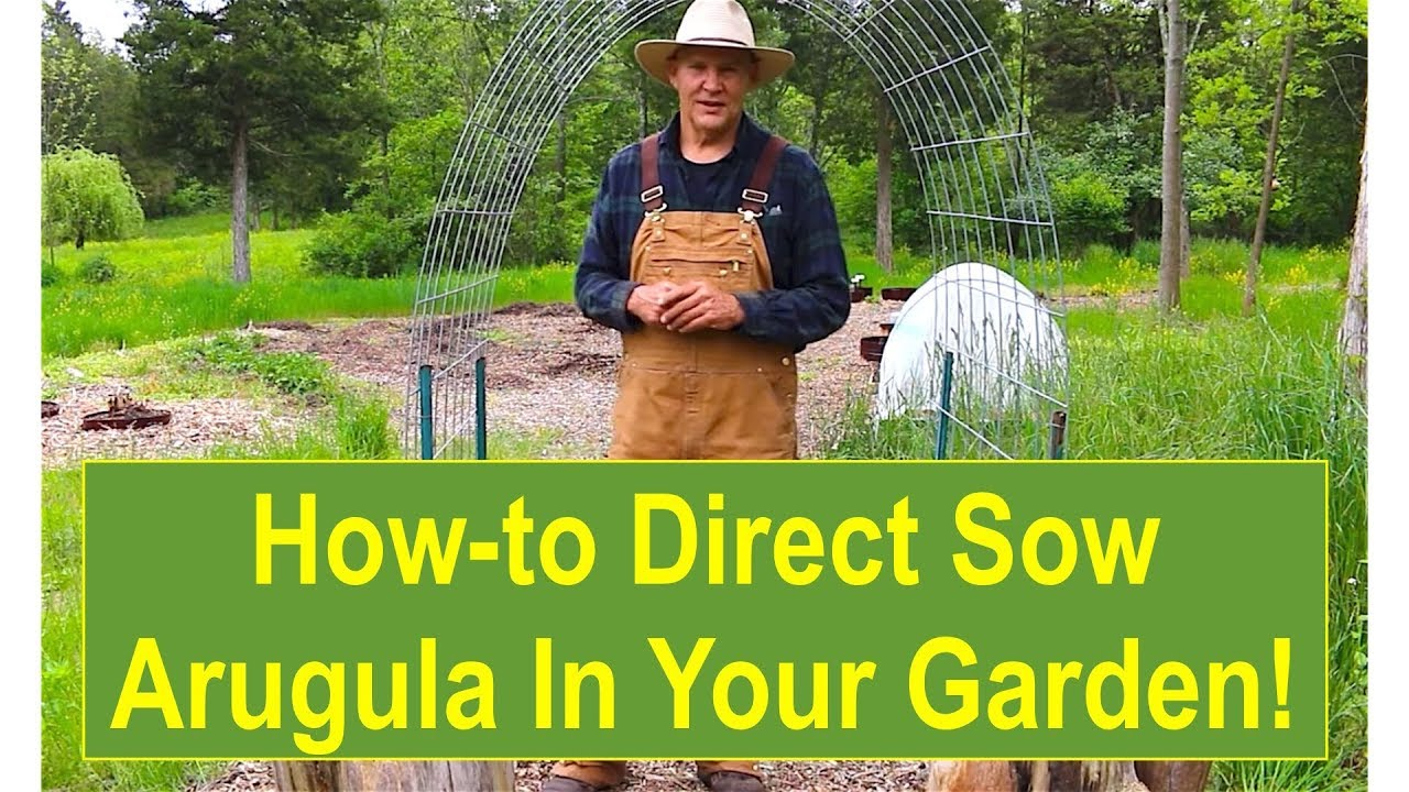 Basic Gardening Tips Tips and Ideas for Growing Your Arugula