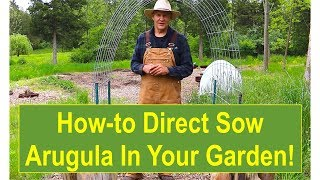 Basic Gardening Tips: Tips and Ideas for Growing Your Arugula Outside