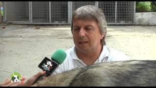 Cucciolandia p.10 (Lupo di Saarloos)  Amici Animali Tv  Canale 248