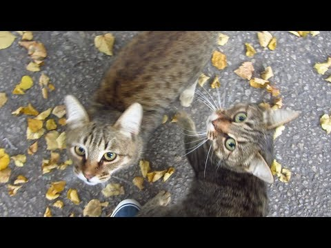 New hungry cats and feral puppy