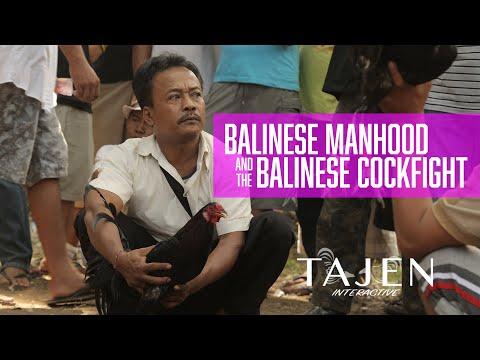 Tajen: Interactive - BALINESE MANHOOD  - Cockfighting in Bali