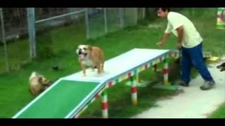 Dog Obedience Training Houston | Call  281-580-8150