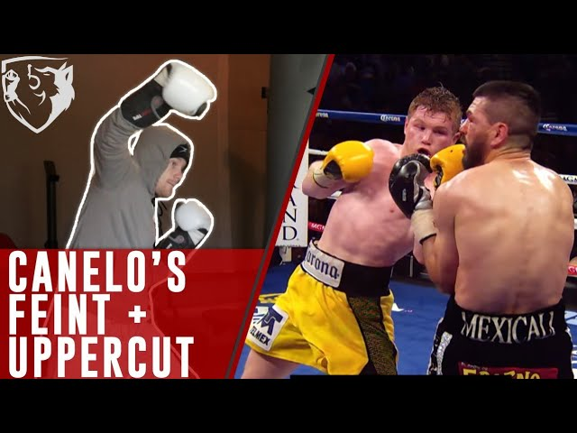 How to Feint like Canelo (Uppercut)