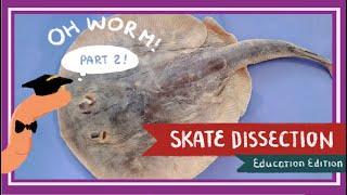 Skate Dissection (Part 2. Abdominal Cavity & Cranial Cavity) || A Mermaid's Purse [EDU]