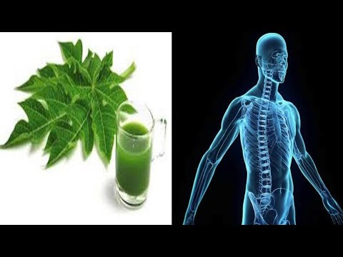 If You Drink Papaya Leaf Juice It Will Cure Many Health Problems!
