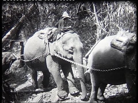 Indochina 1930 Elephants toil  along Mekong river