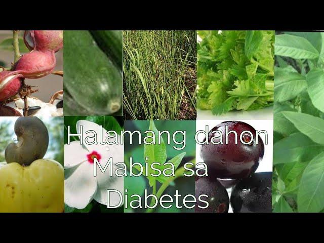 Mabisang gamot sa Diabetes