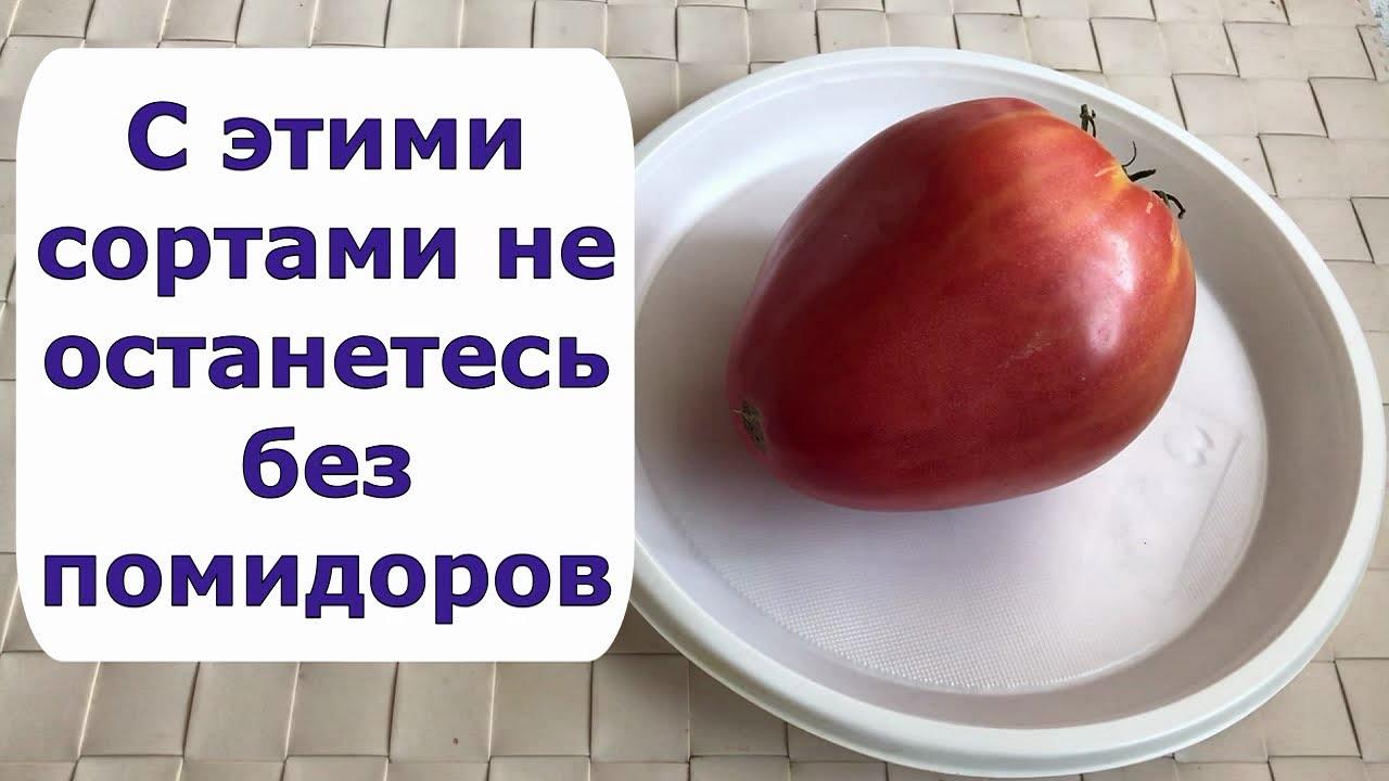 558 Сорта помидоров, которые посадила в этом году