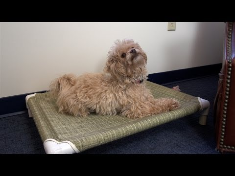 How to Make a Dog Bed - PVC Pet Cot