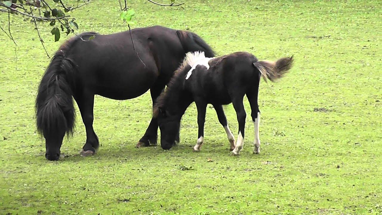 pferd baby