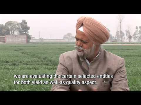 Dr. R.P. Singh, Punjab Agricultural University - Ludhiana, Punjab India