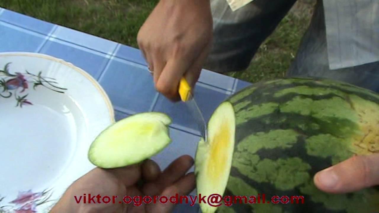 Вкуснотища!!! Дегустируем разные сорта арбузов. - YouTube